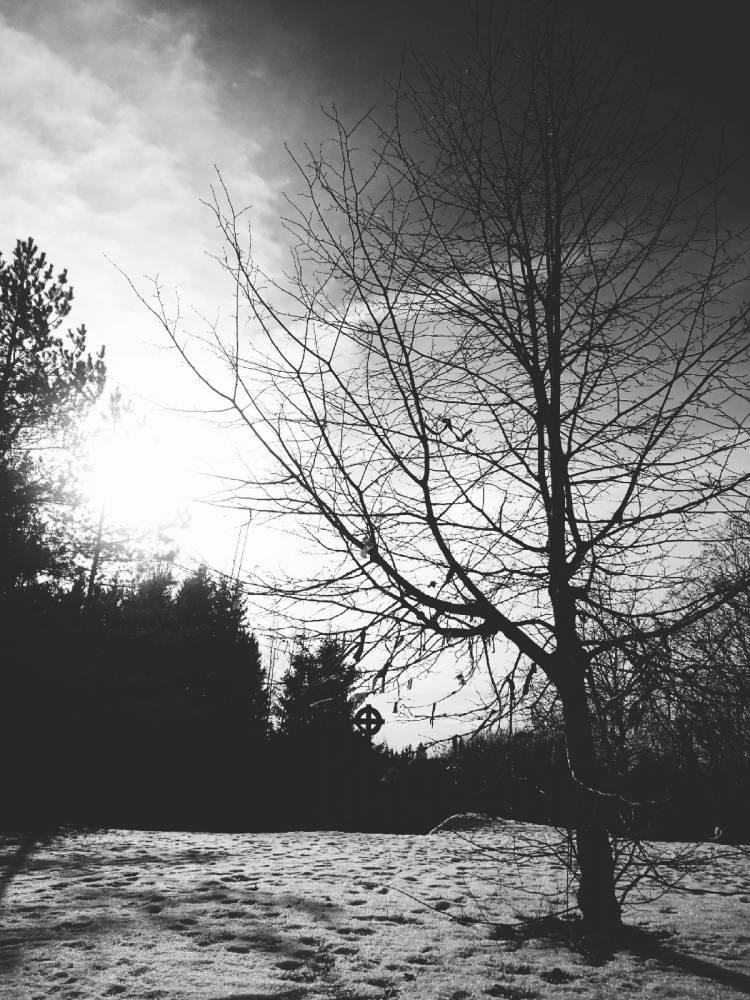 Lindipuu ja hiiekivi
