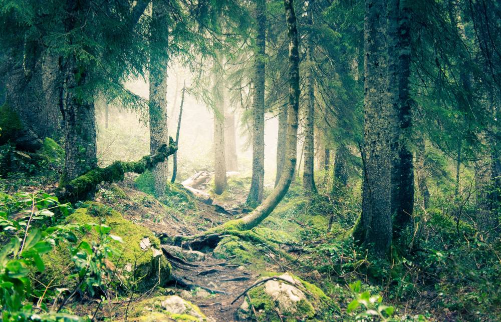 Сказки лесов Абхазии