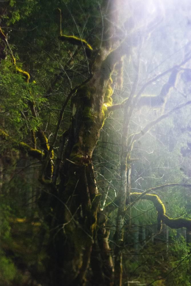Голос священного дерева