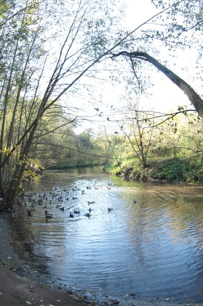 Природно-исторический лесопарк Покровское-Стрешнево  , его источник и его окружение