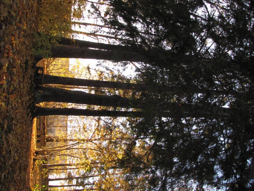 Puud ringis