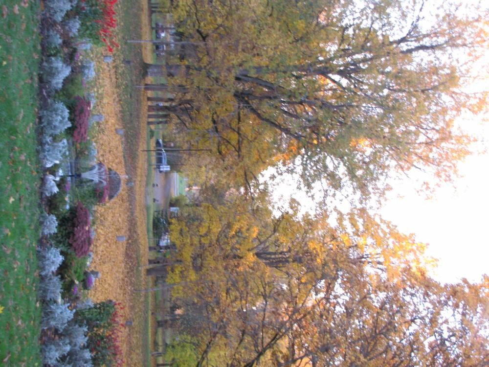 Kirna mõisa park ja teretavad puud