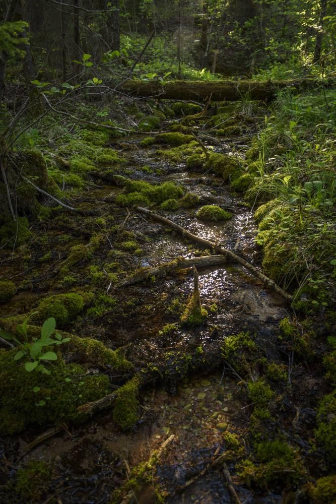 Allika tee metsasügavusse