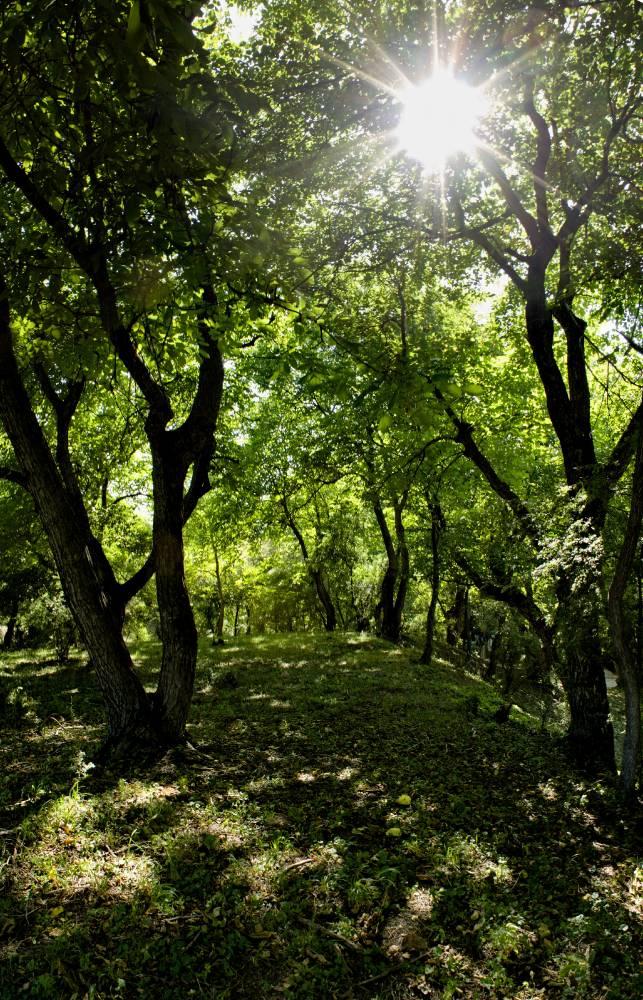 Священные леса Арсланбоб