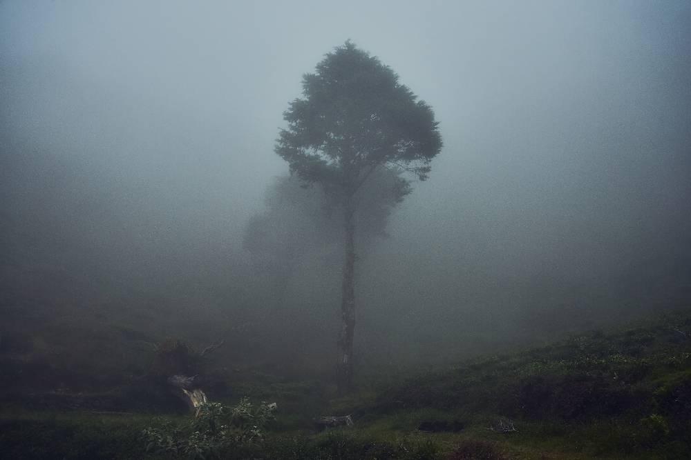 Деревья в облаках