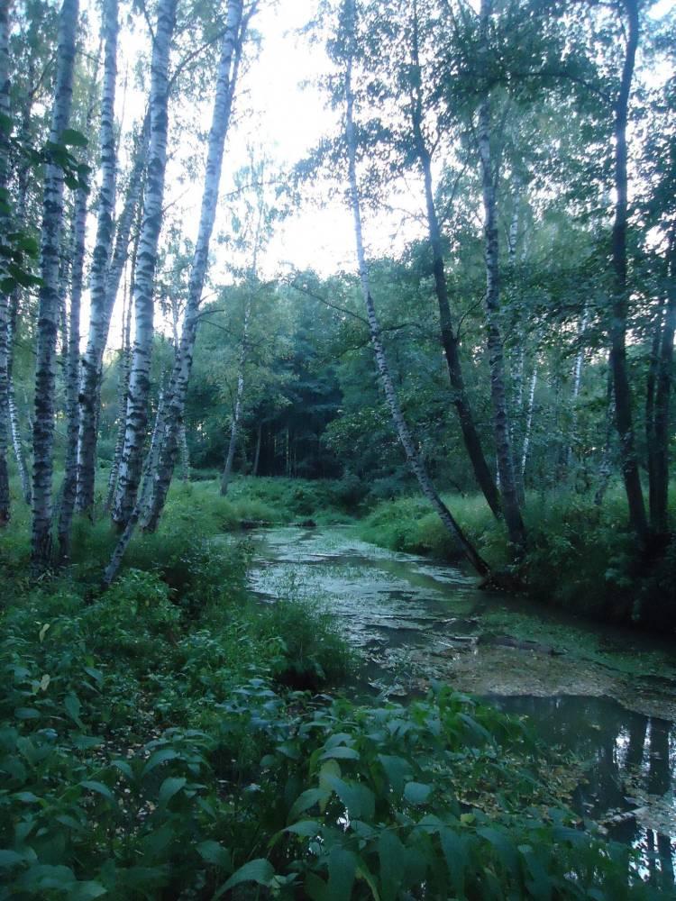 Река Гуслица.
