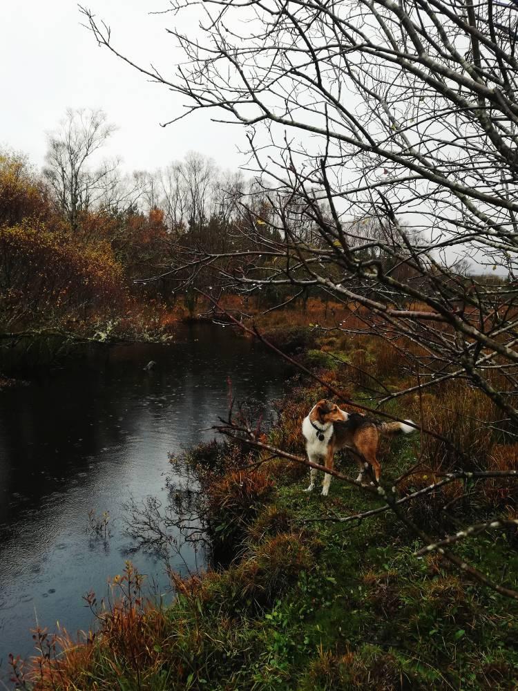 Затихающая река (еще)