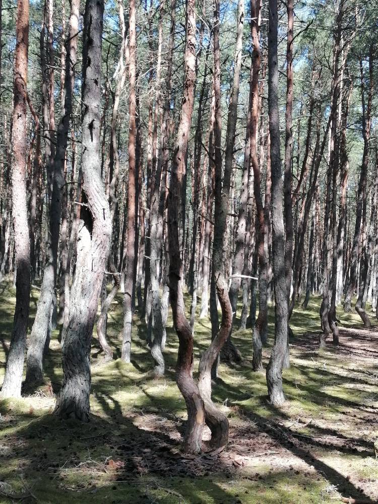 Waltzing trees