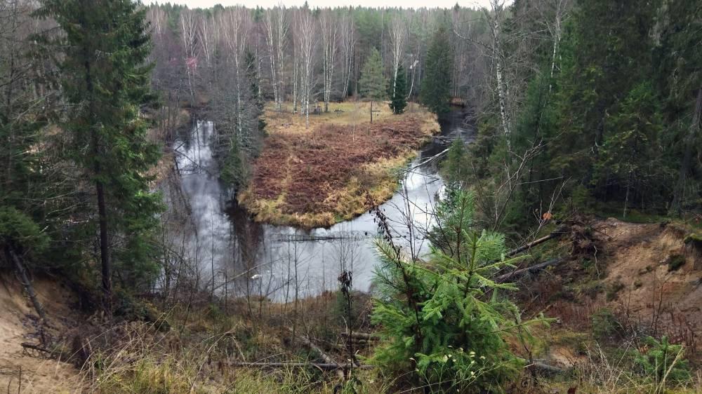 Священный лес Райвола