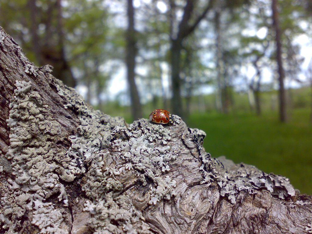 Lepatriinu Hiiepuul