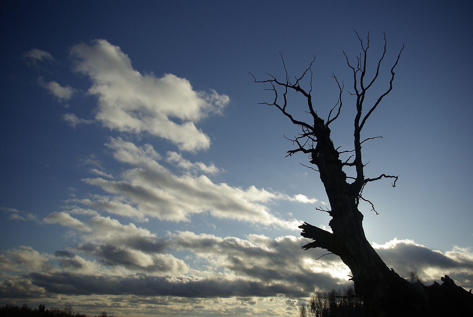 Hiiepuu lahkumine