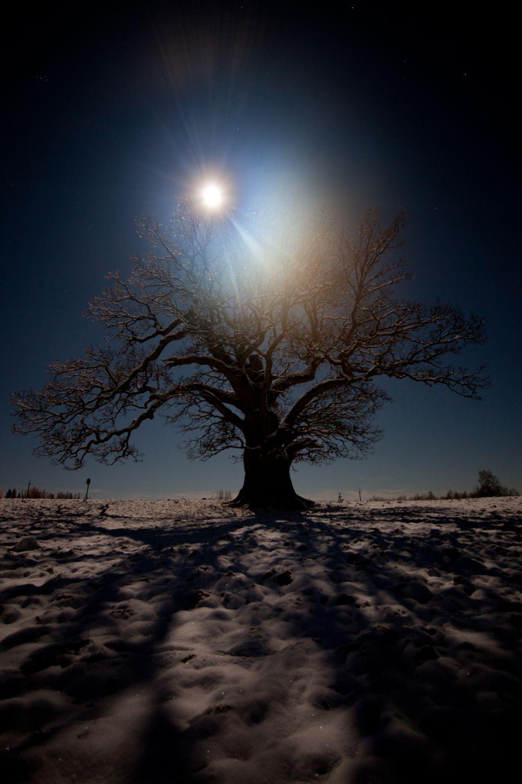 Kui see puu oskaks rääkida...