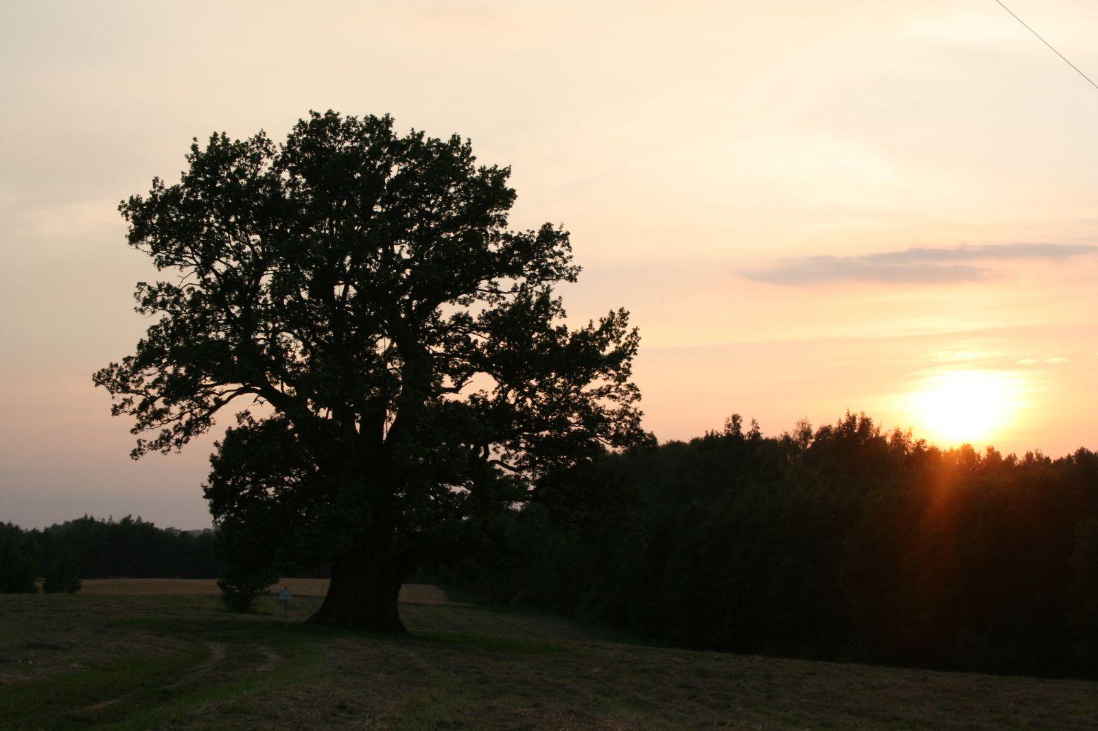 Tamme-Lauri tamm ehavalguses