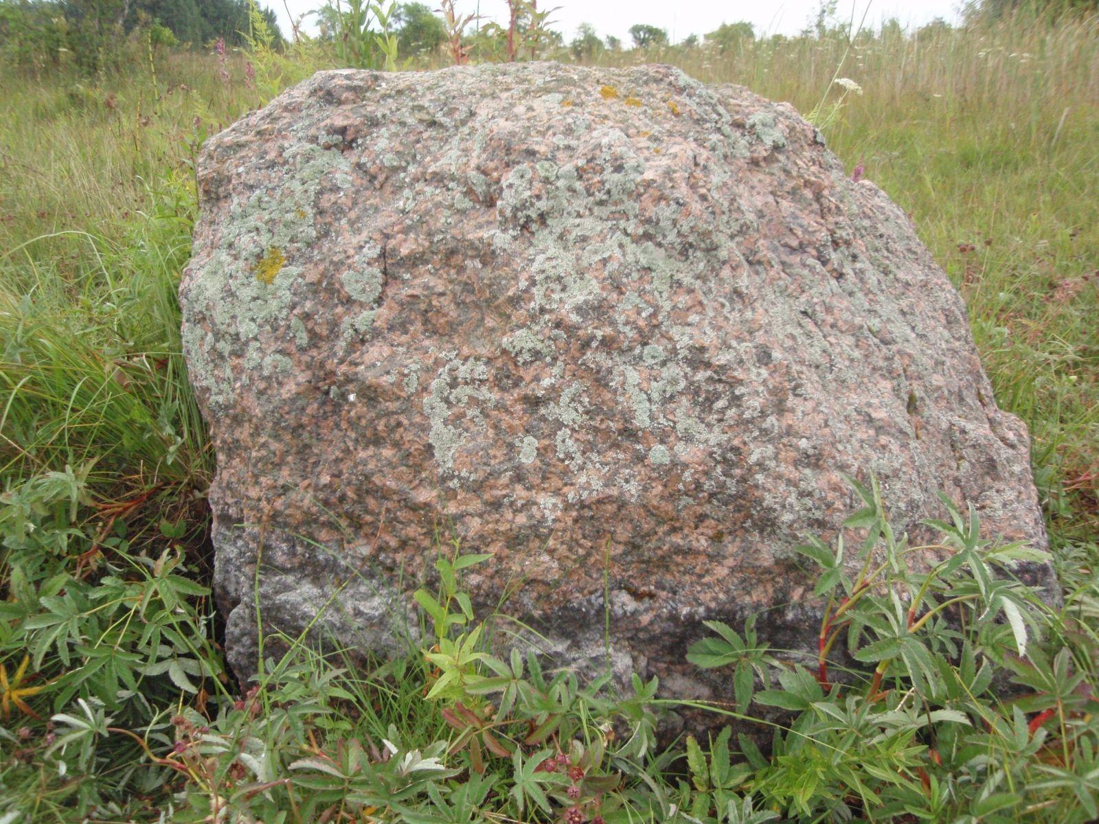 Odini kivi