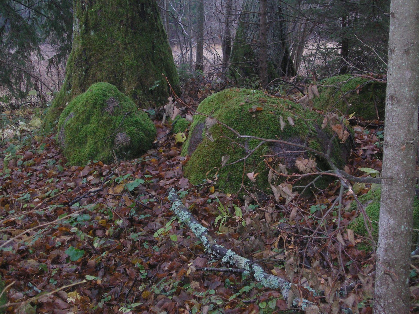 Hiiepuud ja -kivid