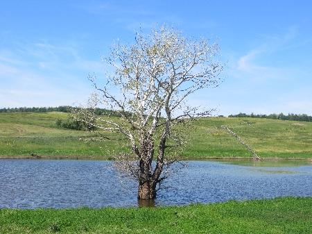 Дерево в озере