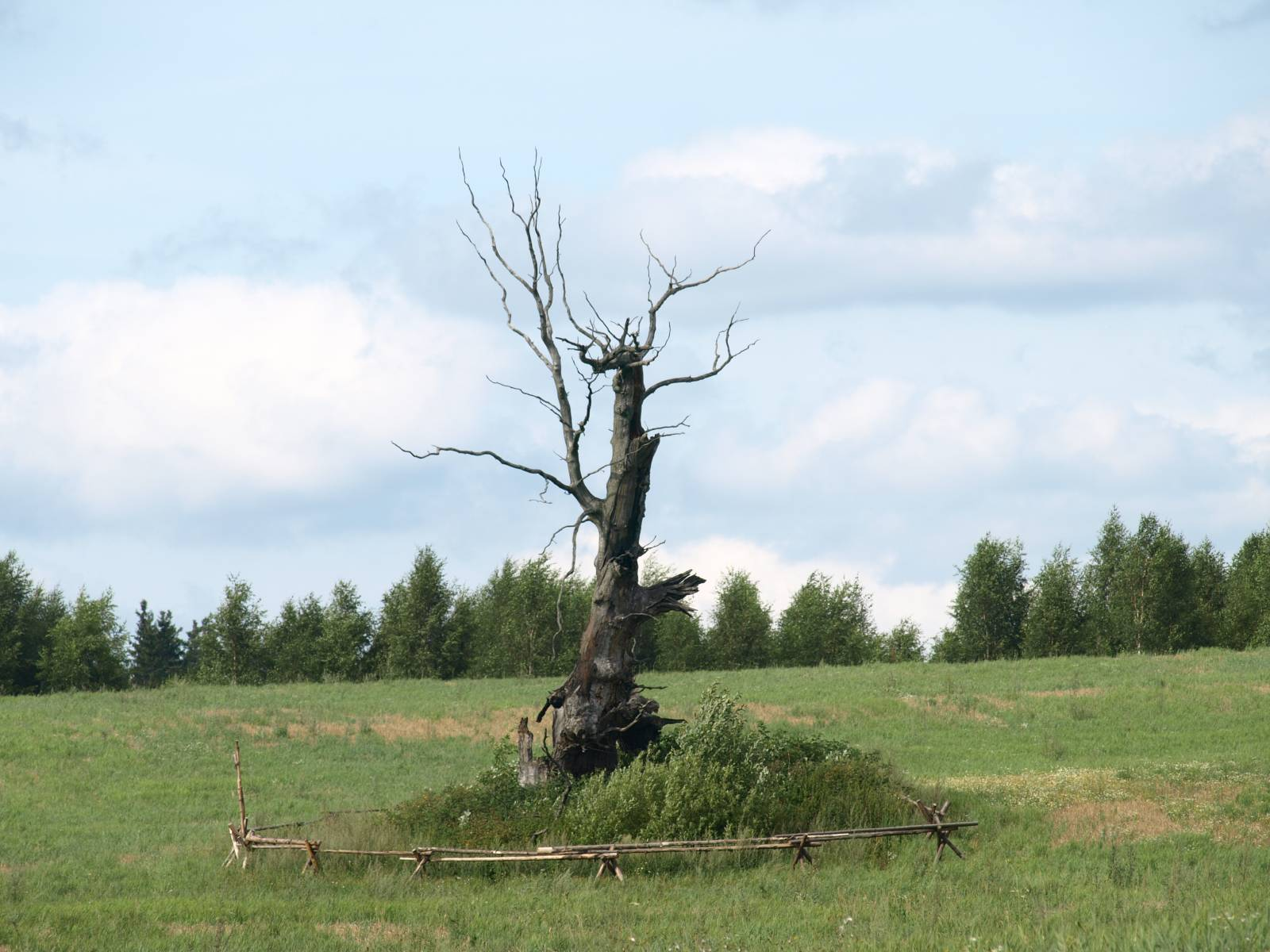 Surnud puu