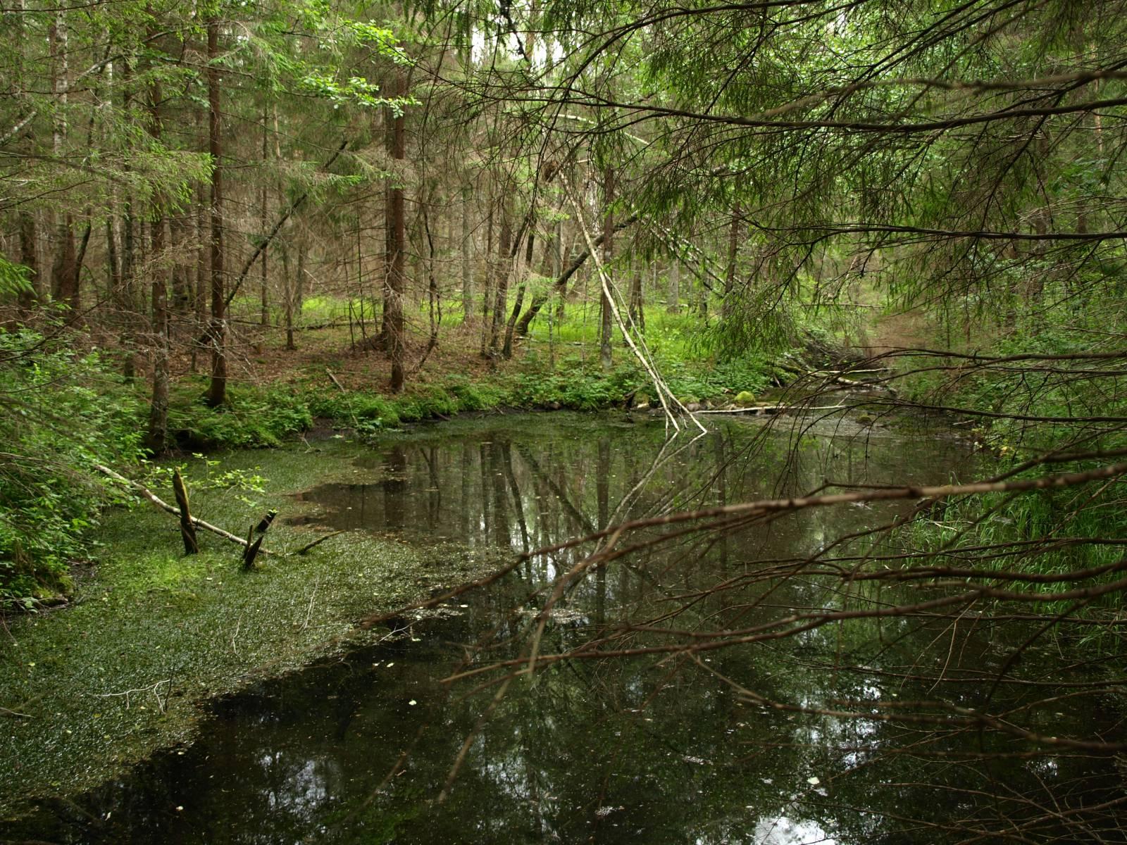 Veekogu keset metsa