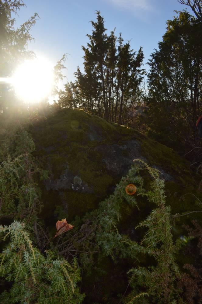 Uku kivi sügiseses päikeses