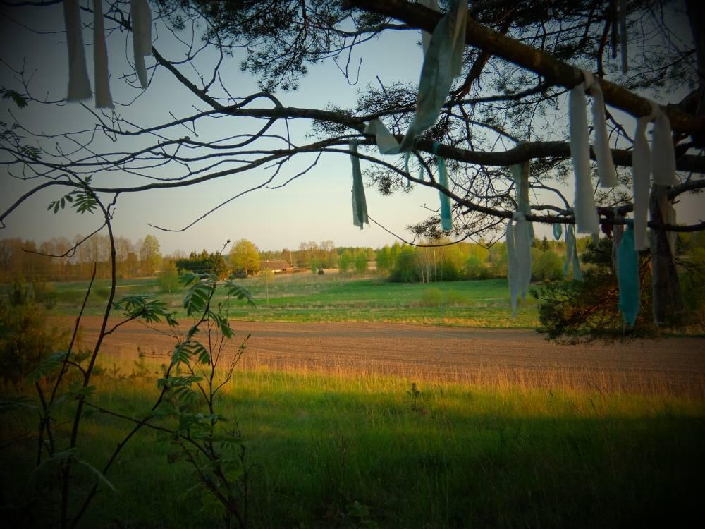 Linte Luhamäe ohverduskoht