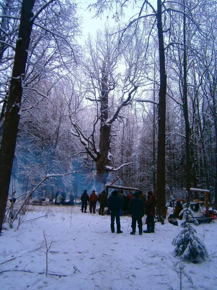 Древний дуб - Онапу (священное дерево) ранним утром перед молением. Vana tamm - Onapu (pühapuu) vara hommikul enne palvuse.