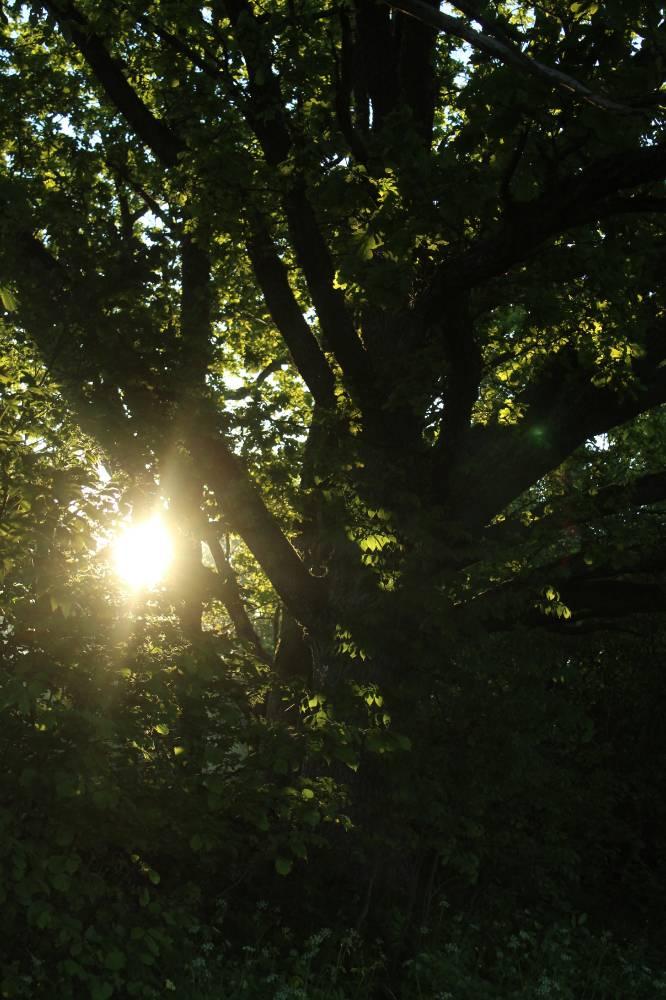 Päikesetervitus