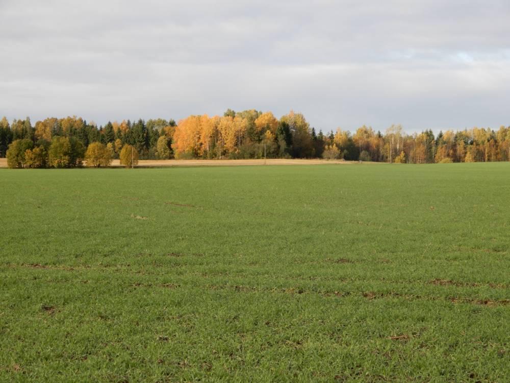 Abaja Hiiemägi