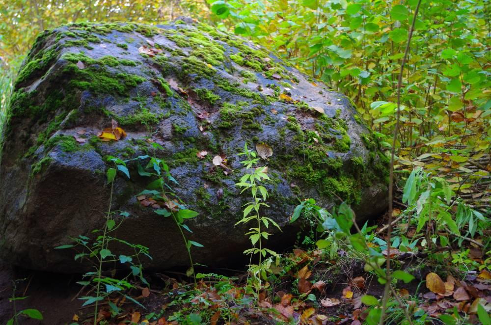 Katslaaugu kivi