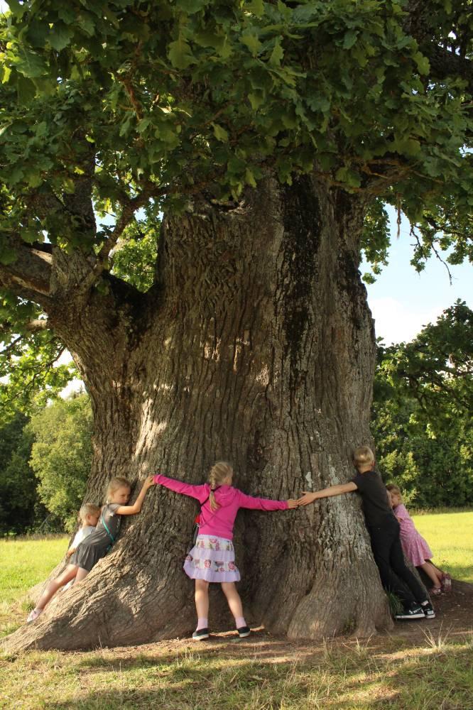 Eestimaa puude kuninga kallistamine