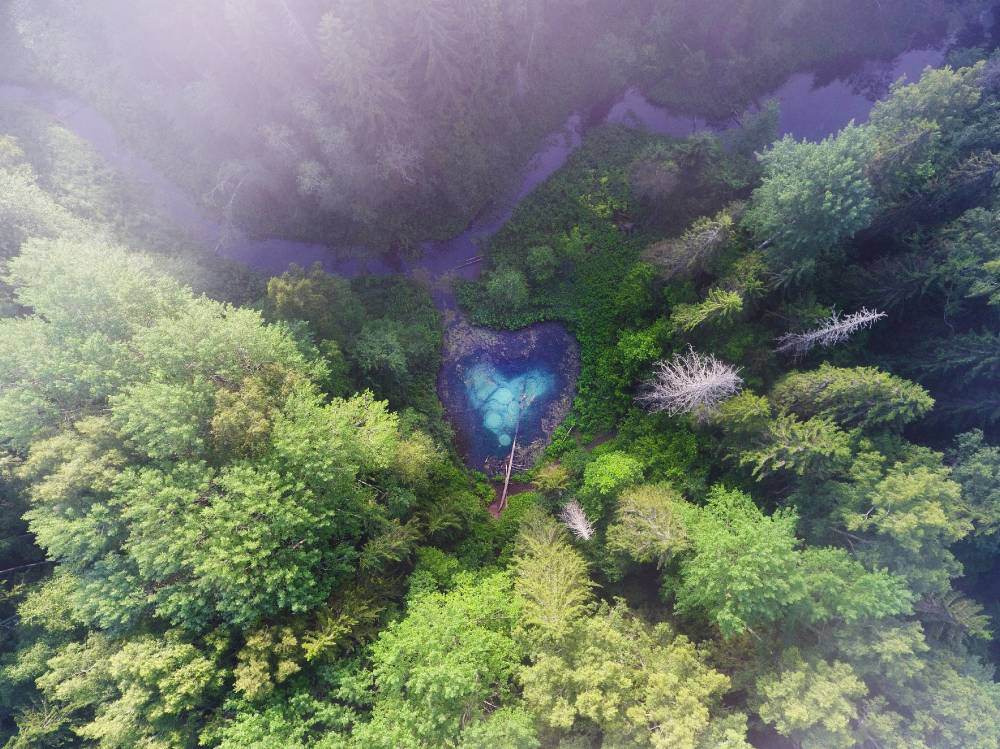 Metsa süda