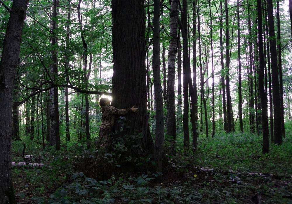 Дерево наших предков
