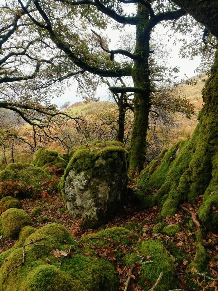 Камень друидов
